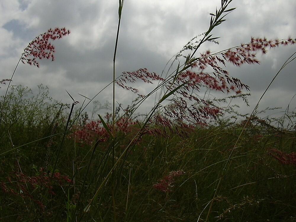 grass by pugazhraj