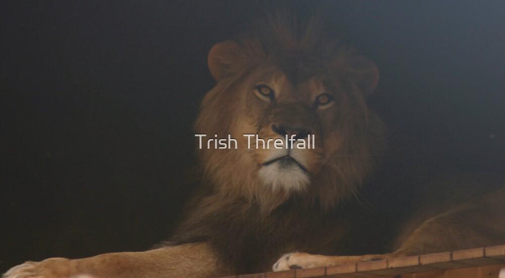 Untitled by Trish Threlfall