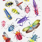 Colorful Bugs and Beetles Collection by Stephanie KILGAST