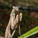 Mantis by Trevor Needham