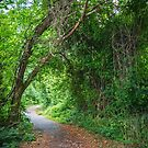 Natural Woodlands Arch by andykazie