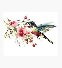 Hummingbird and Flowers Photographic Print