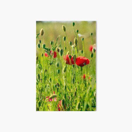 red poppy in the wheat field Art Board Print