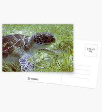 Green Turtle Postcards