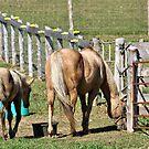 Horse by terrebo