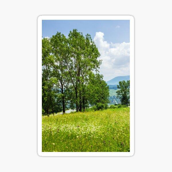 forest glade on hillside Sticker