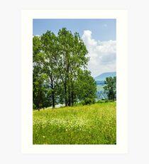 forest glade on hillside Art Print