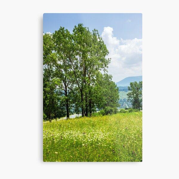 forest glade on hillside Metal Print