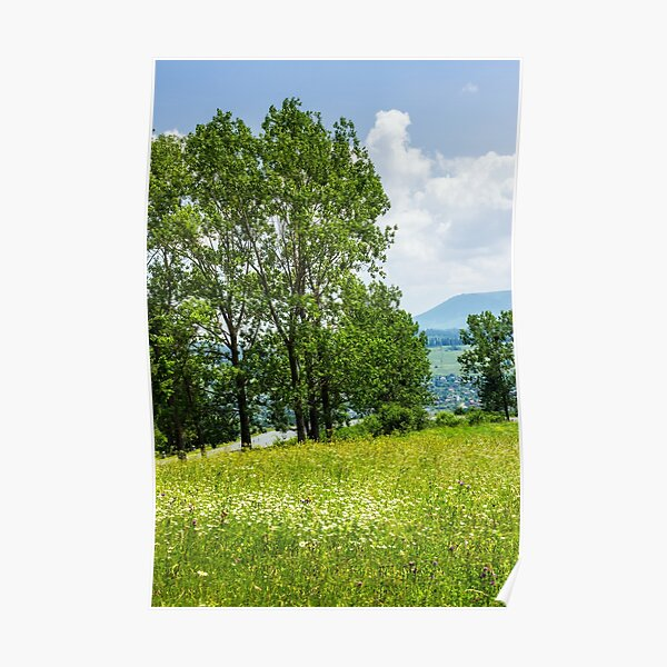 forest glade on hillside Poster