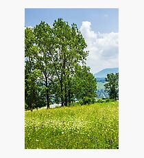 forest glade on hillside Photographic Print
