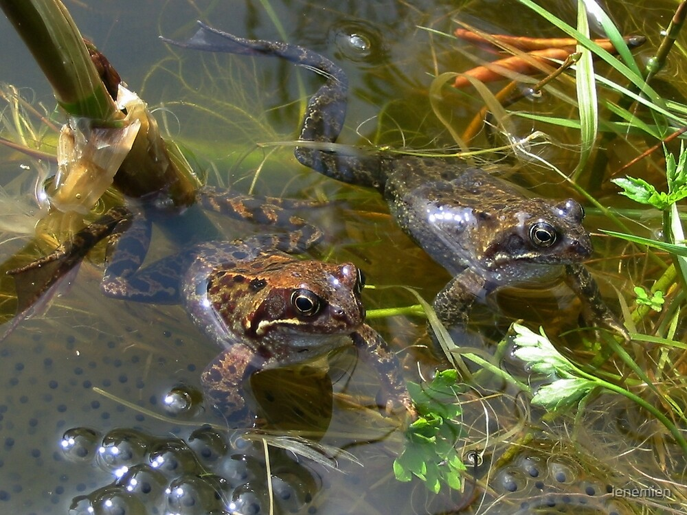 Two frogs and their little frog jelly by ienemien