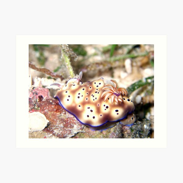 Nudibranch Art Print