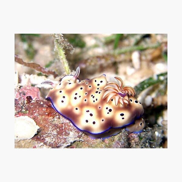 Nudibranch Photographic Print
