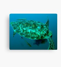 Green turtle shell Canvas Print