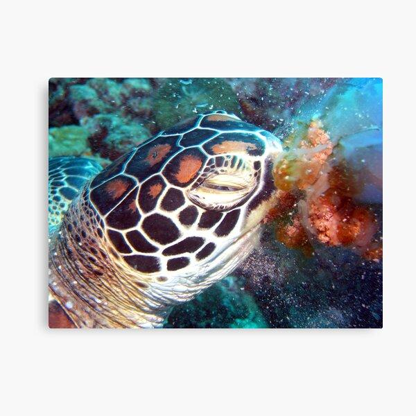 Turtle Jelly Canvas Print