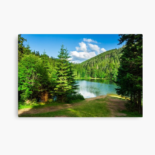 lake near the mountain in pine forest Canvas Print