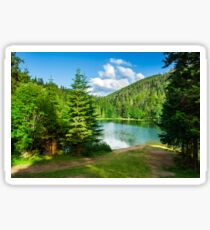 lake near the mountain in pine forest Sticker