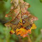 Patchwork Leaf by relayer51