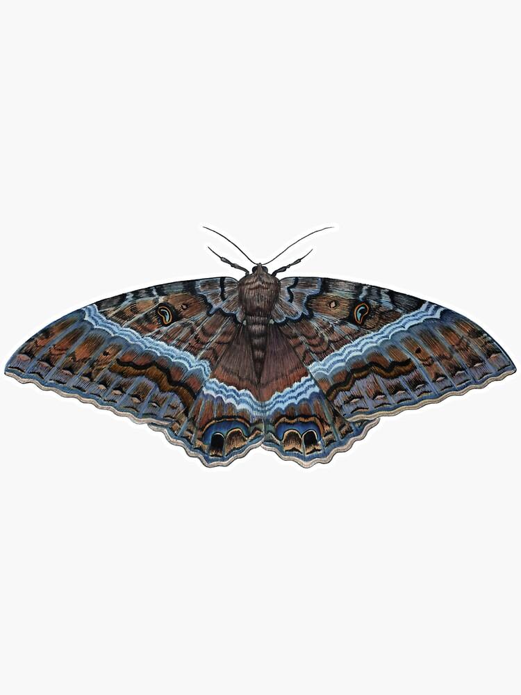 Black Witch Moth (Ascalapha odorata) by JadaFitch