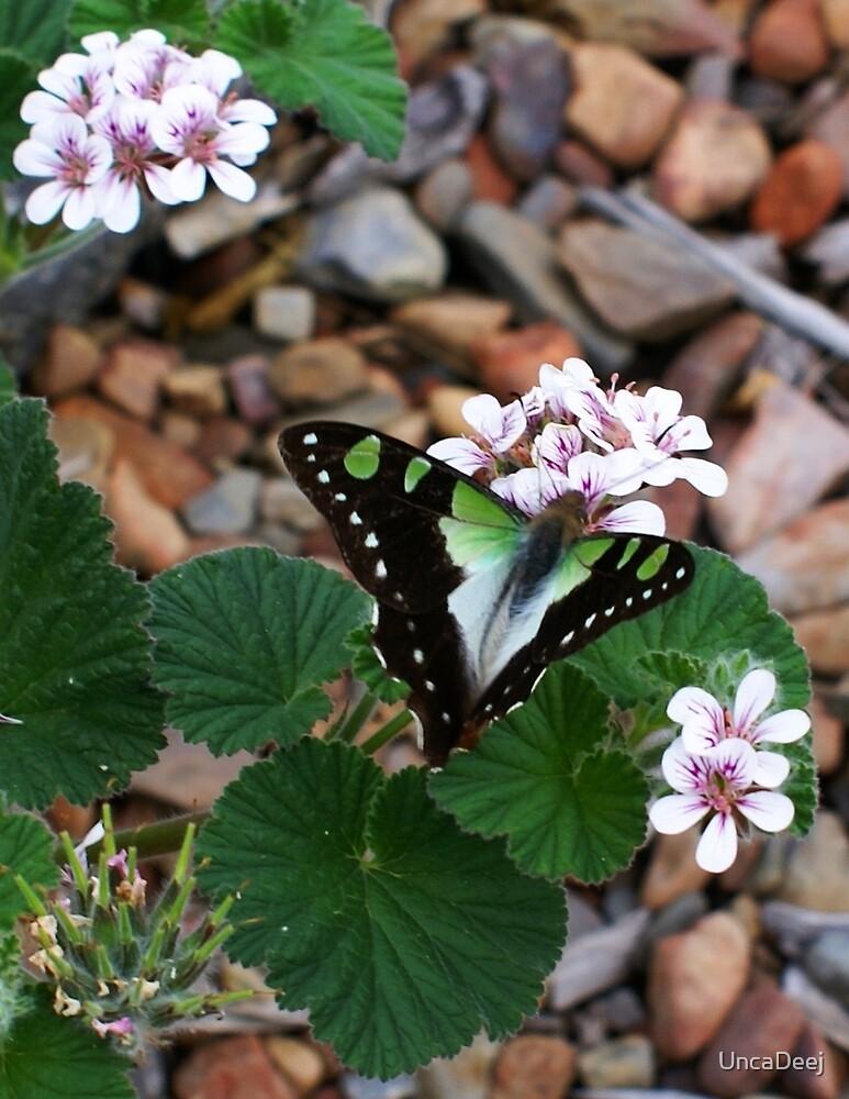Butterfly by UncaDeej