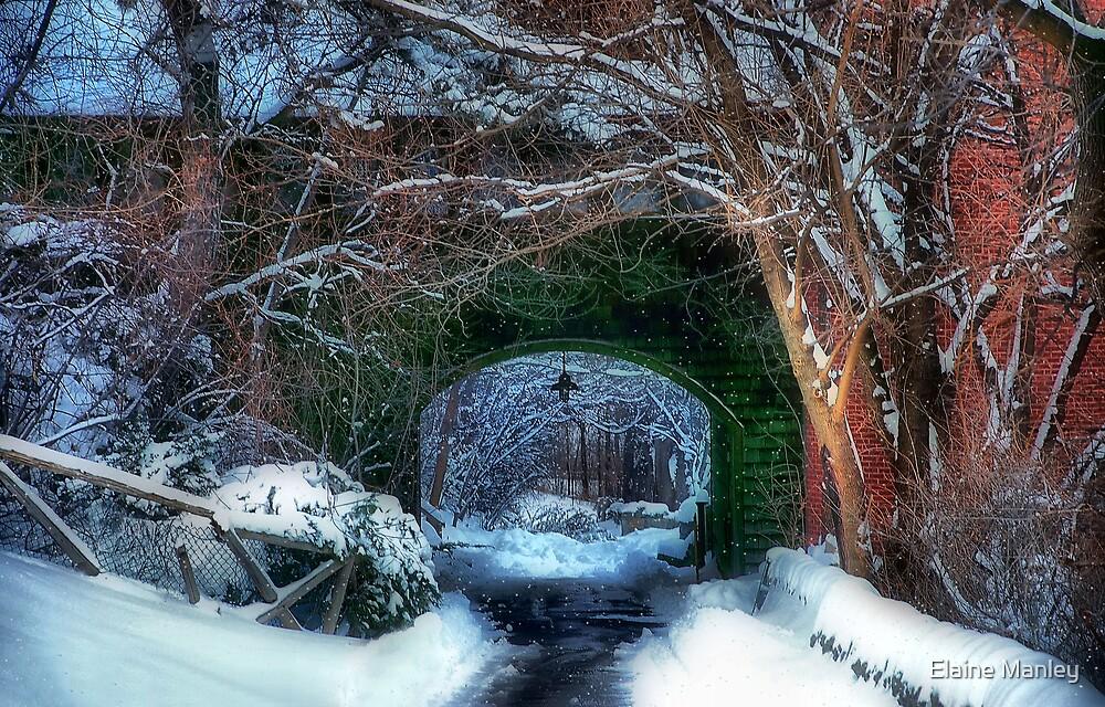 Snowy Walk  by Elaine  Manley