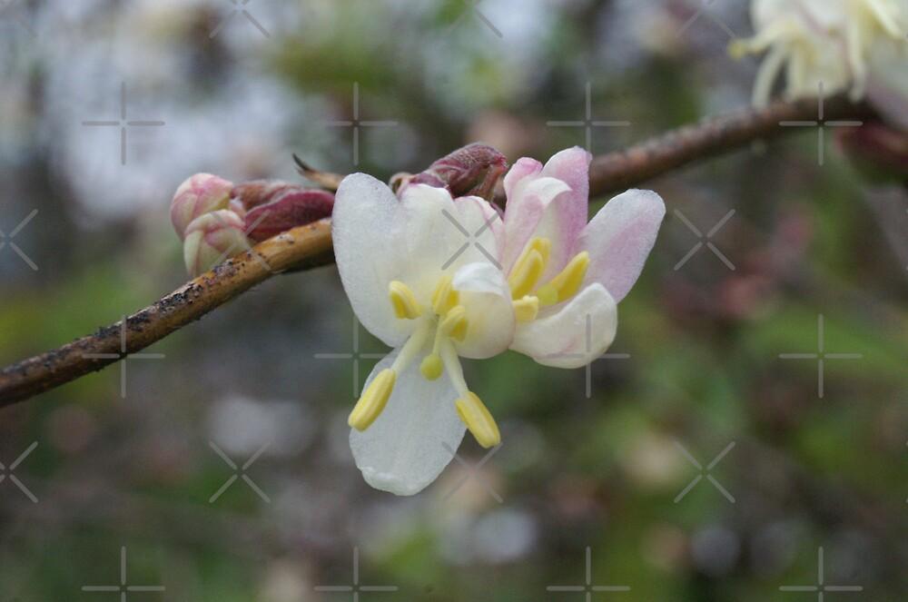 precious winter flowers by poupoune