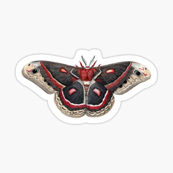 Cecropia Silkmoth  Sticker