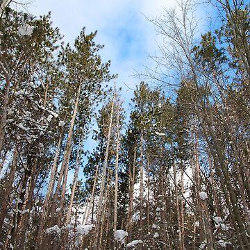 Chestnut Ridge Snow Trees by travispowers