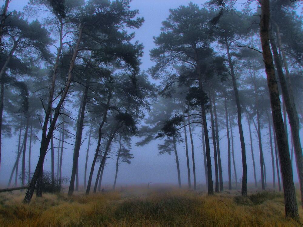 Foggy by Geri van den Boom