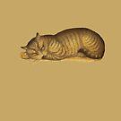 sleepy kitty  by bristlybits