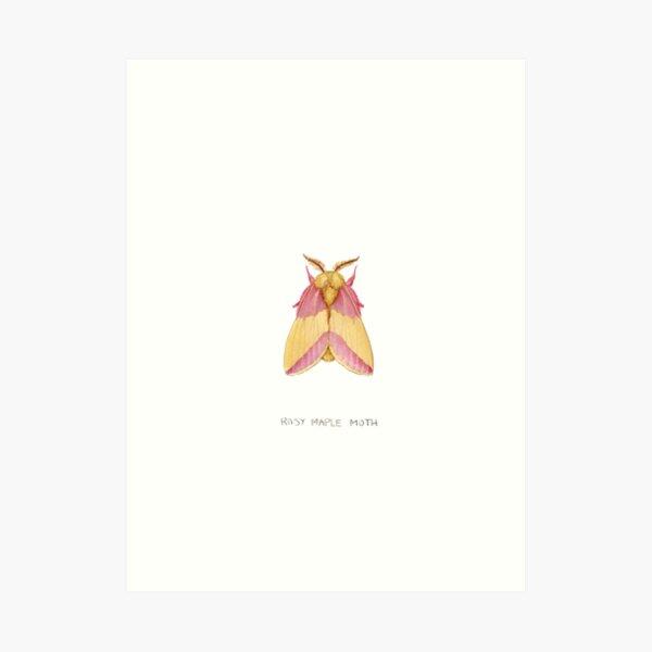 Rosy Maple Moth (Dryocampa rubicunda) Art Print