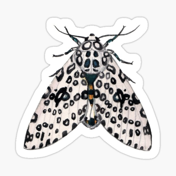 Giant Leopard Moth (Hypercompe scribonia) Sticker