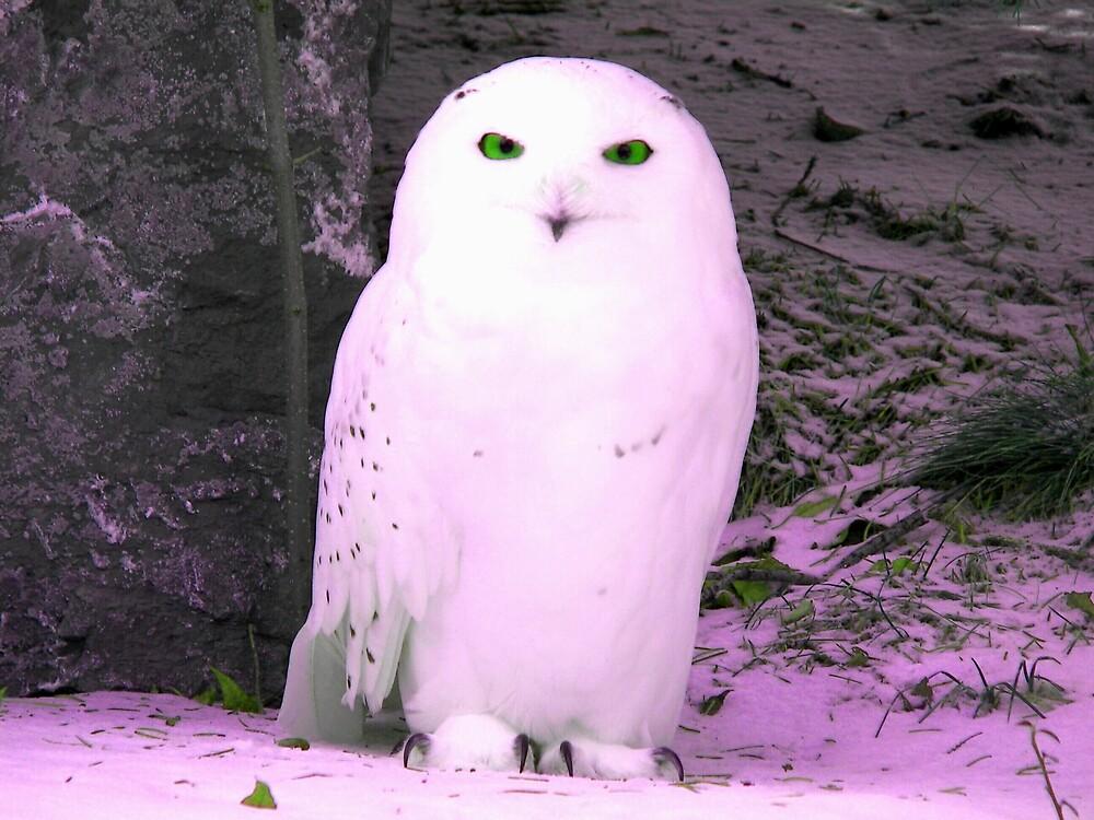 Snow Owl by madmac57