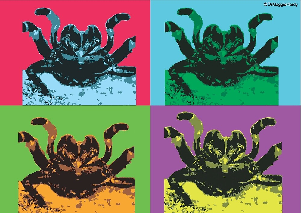 Warhol-inspired funnel-web spider by drmaggiehardy