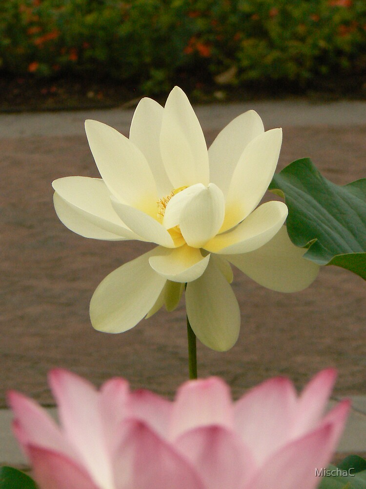 White Lotus - 2 by MischaC