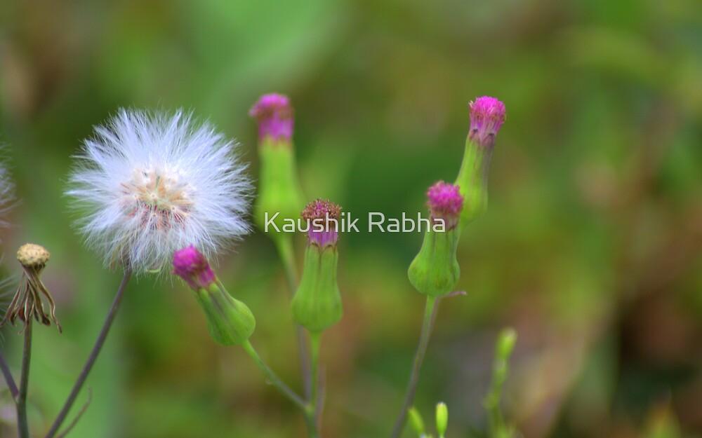 Admirer by Kaushik Rabha