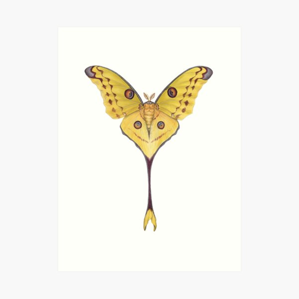 FREE P/&P in UK! Green Luna Moon Moths Butterflies VINTAGE Art DICTIONARY PRINT