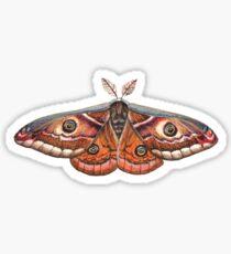 Small Emperor Moth (Saturnia pavonia) Sticker