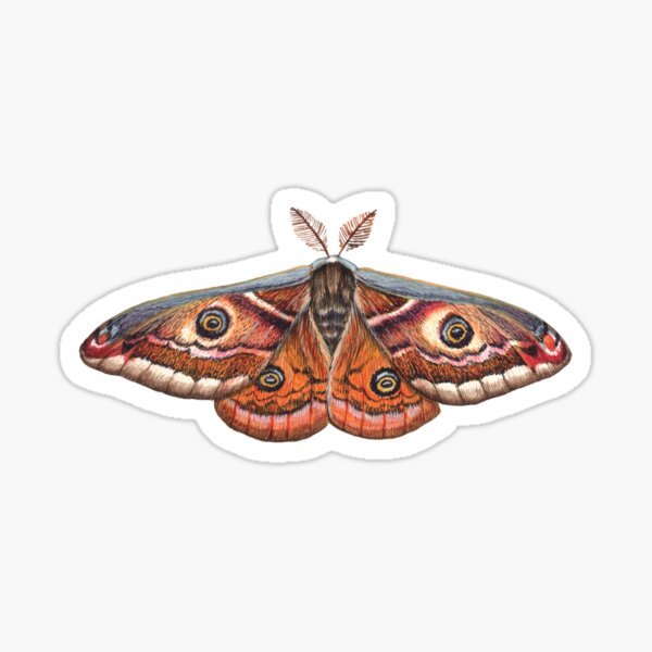 Small Emperor Moth (Saturnia pavonia) Sticker