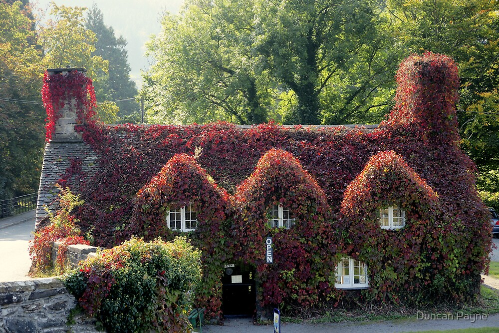 Ivy Covered Cottage by Duncan Payne