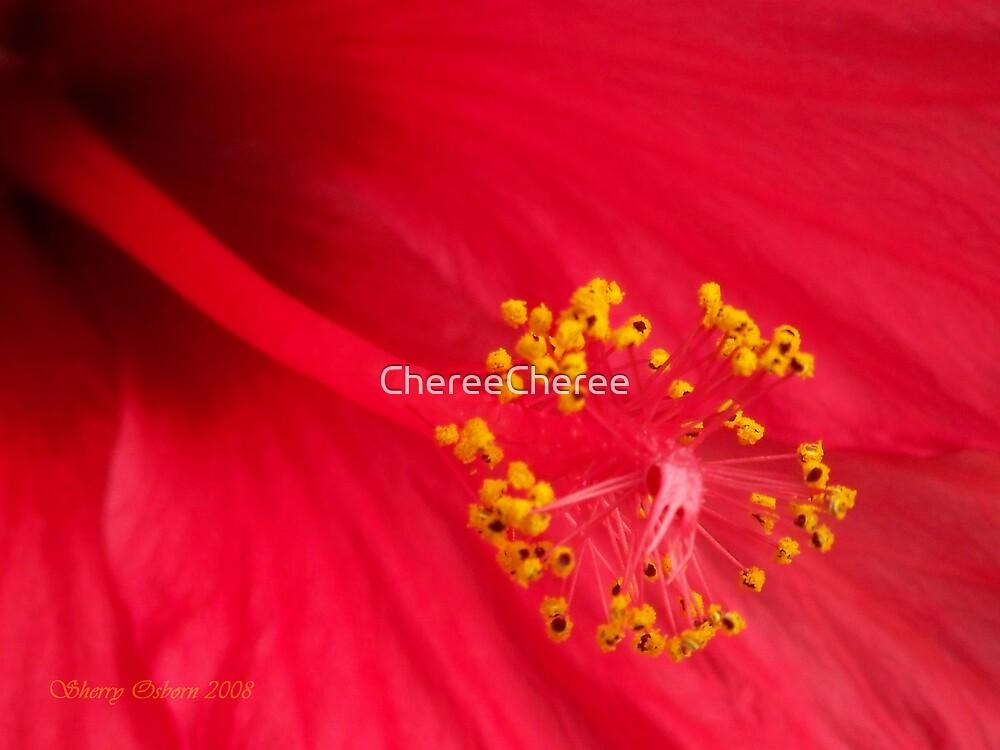 Hibiscus by ChereeCheree