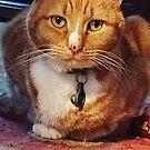 Teddy-the orange cat by Patricia127