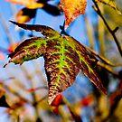 Autumn's Palette by Ron Alcorn