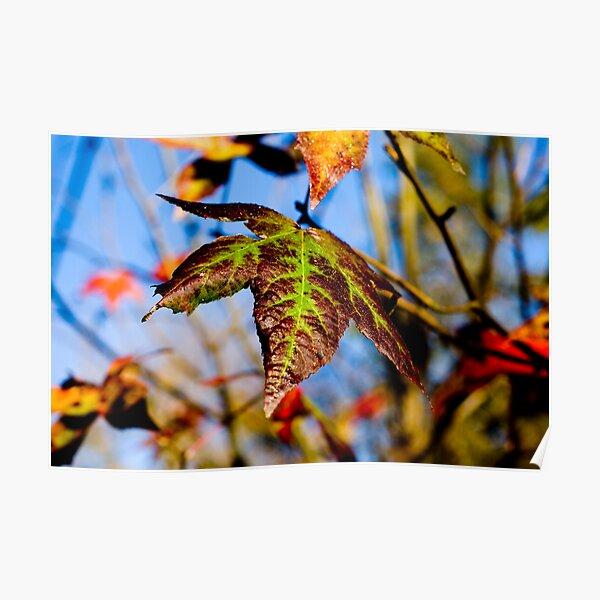 Autumn's Palette Poster