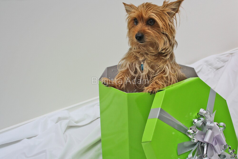Christmas Gift - Part 2 by Brigitta Adam