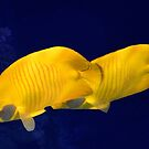 Mysterious Masked Butterflyfish Couple by hurmerinta