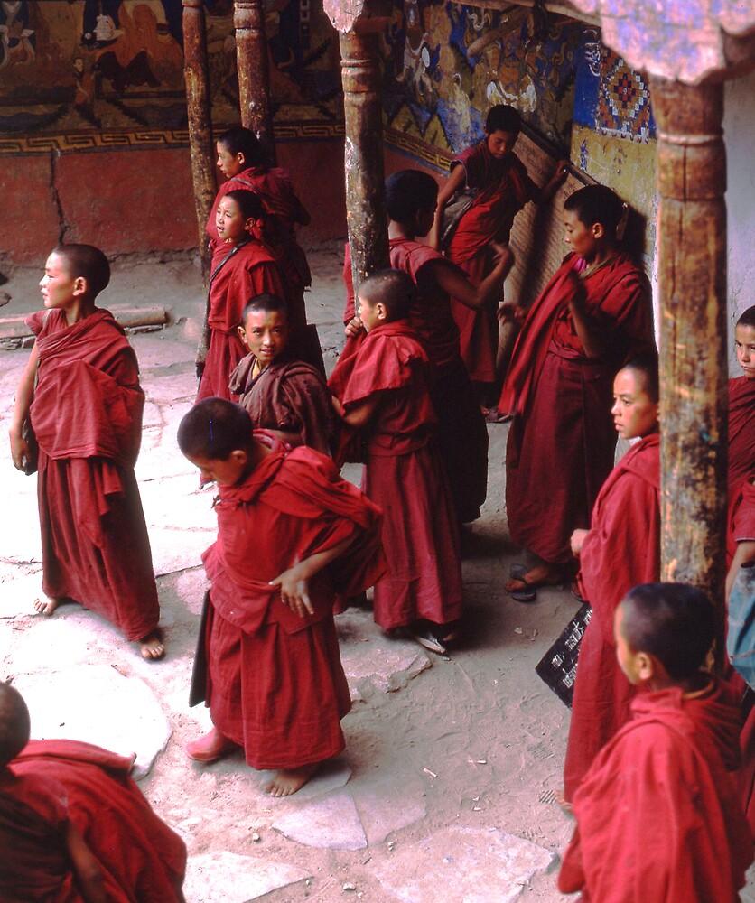 Ladakhi trainee monks by garryr