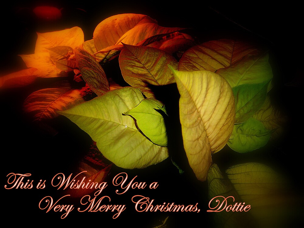 Poinsettia Shadows and a Merry Christmas by DottieDees