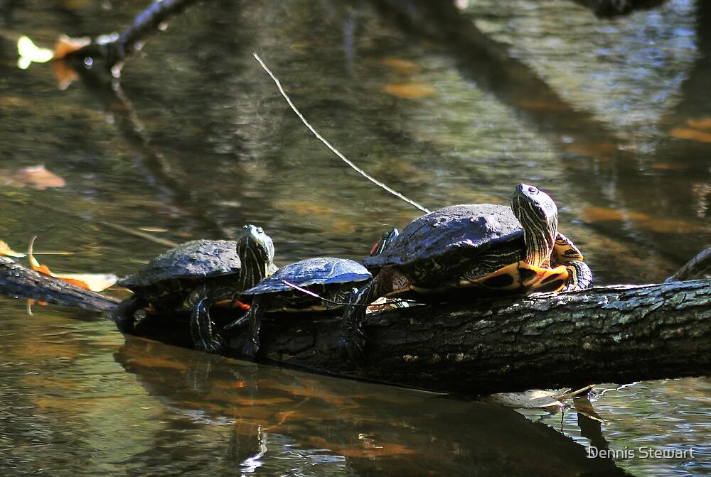 Turtle Log by Dennis Stewart