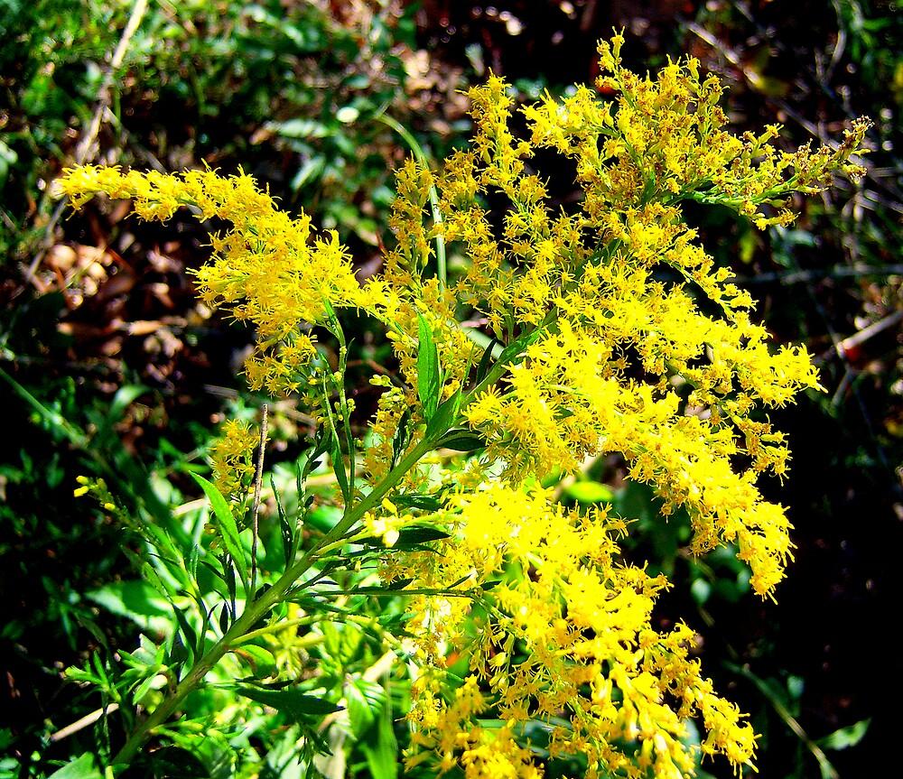 Wildflower-Goldenrod by DottieDees